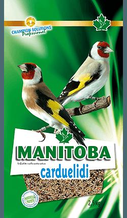 Manitoba Carduelidi chia