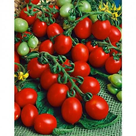 semi pomodoro principe borghese semina pomodorino