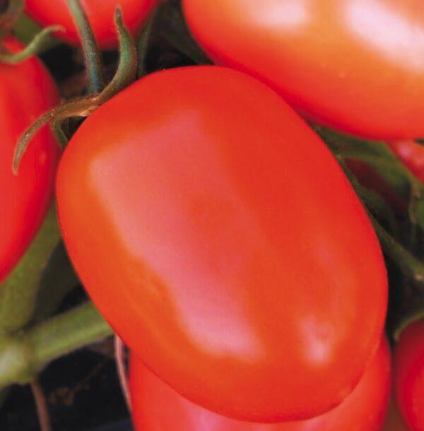 semi pomodoro rio grande salsa