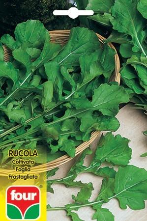 semi rucola frastagliata four