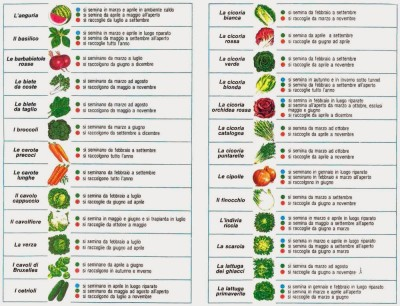 ortaggi-semina