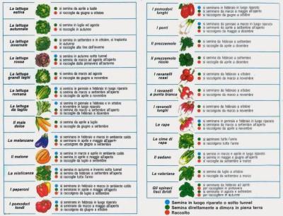 semina-ortaggi