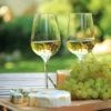 Uva vino bianca