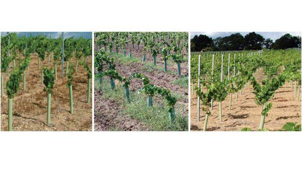 shelter viticoltura shelter protezione barbatelle flat p 3