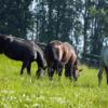 Recinzioni Elettriche per animali