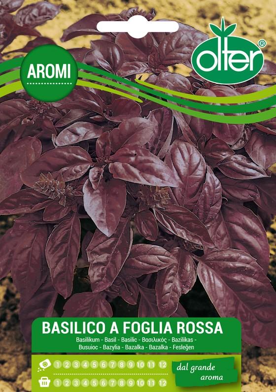 Basilico foglia rossa semi