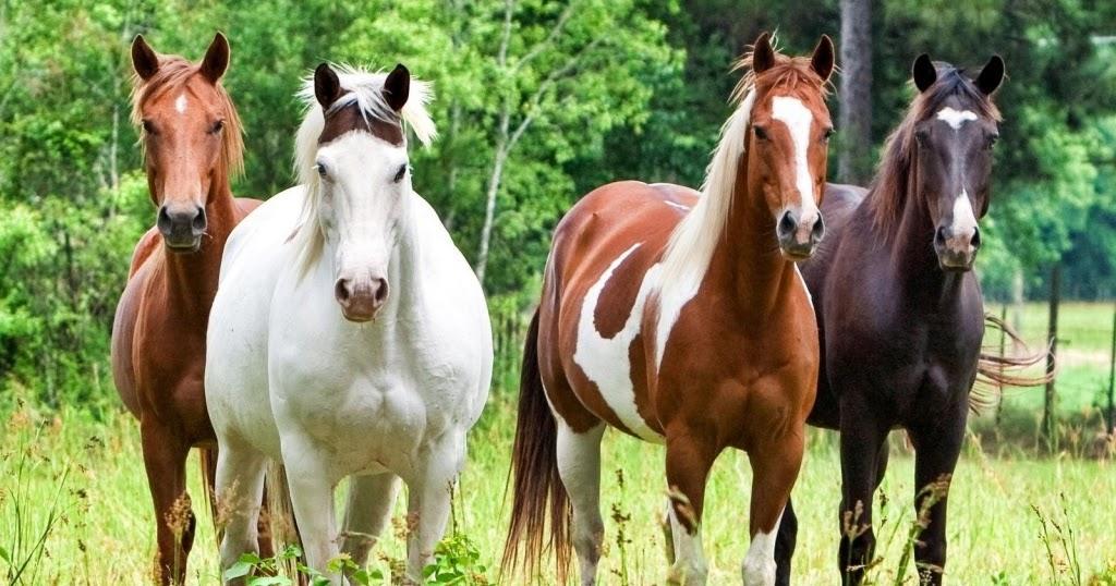recinto cavalli