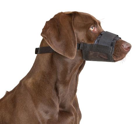 Museruola in nylon per cani economica