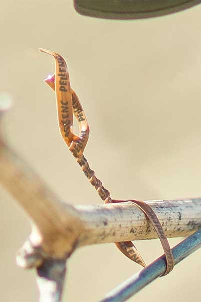 filo legatrice pellenc