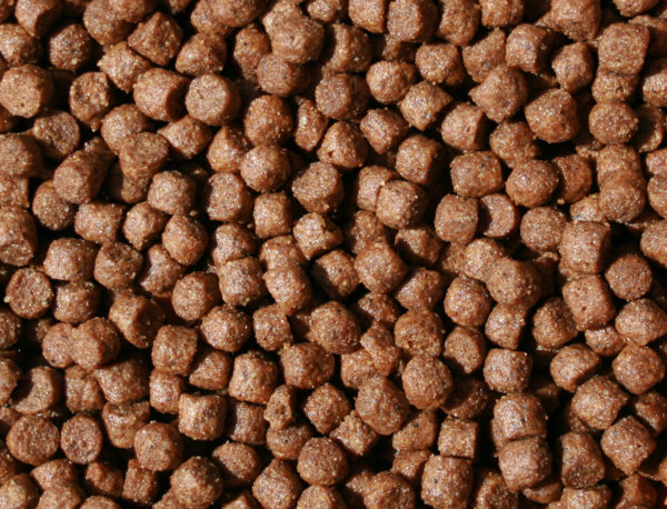 Best Breeder 360 active allevatori crocchette per cani