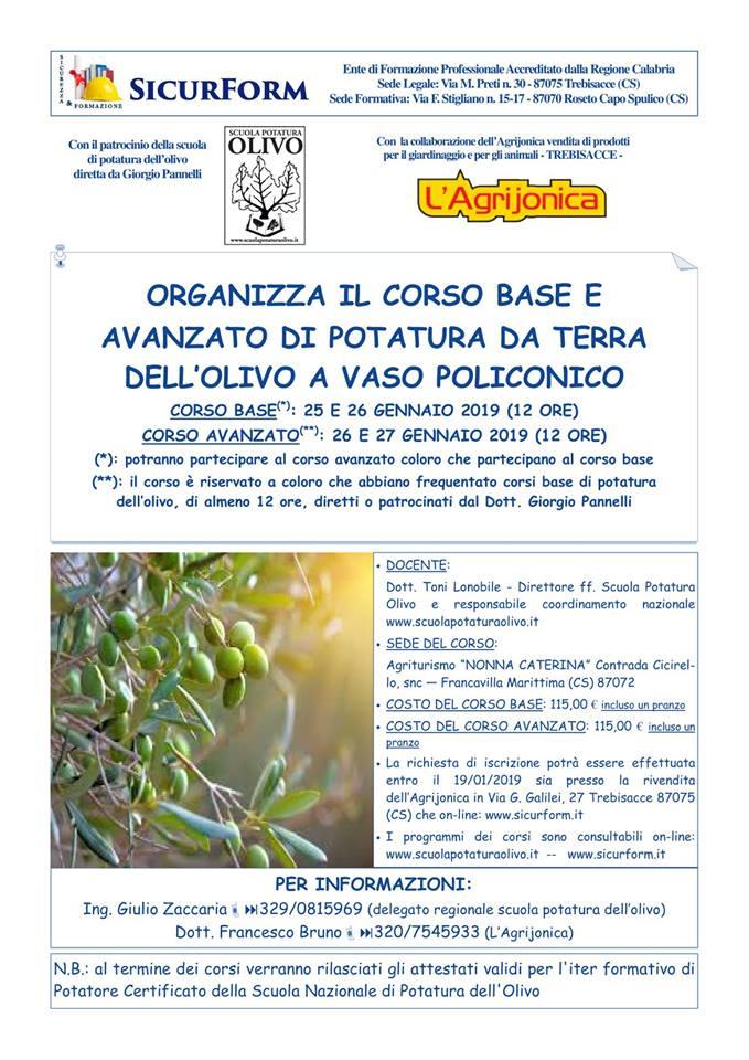 corso-base-avanzato-potatura-olivo