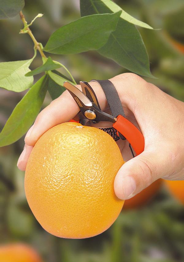 Stocker forbice raccolta agrumie frutta